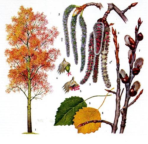 Еще деревья и кустарники Москвы - запись пользователя ... Молодец