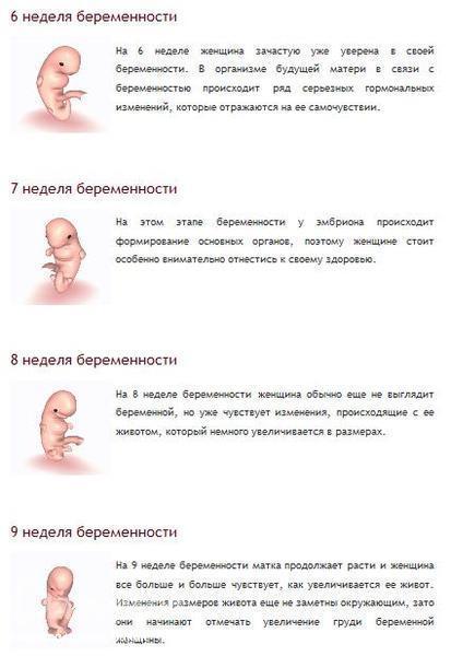 Месяца по неделям беременности