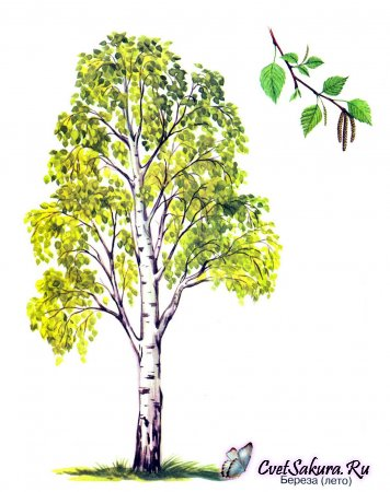 Конспект занятия по лепке Осенняя берёза