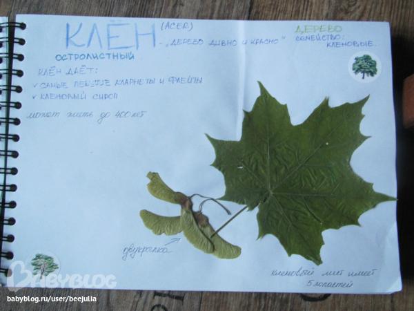 Как сделать книжку для гербария