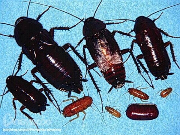 Як боротися з тараканами в домашних условиях