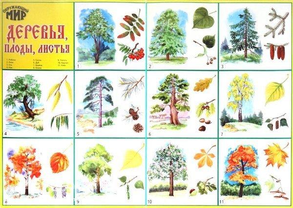 для детей знакомство с деревьями