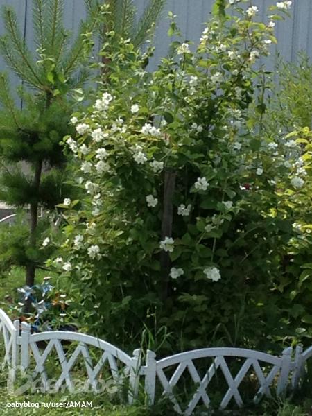 Поделки для сада и огорода своими